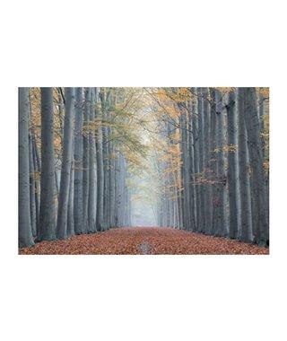 Картина Signal TREES II 120х80